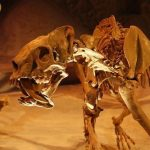 10 Facts about Saber Tooth Tigers