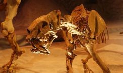 Facts about Saber Tooth Tigers