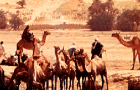 Facts about the Sahel Desert