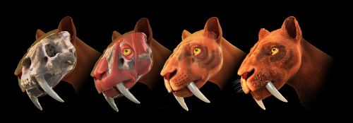 Saber Tooth Tigers Pic