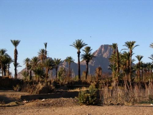 the Sahara Desert Pic
